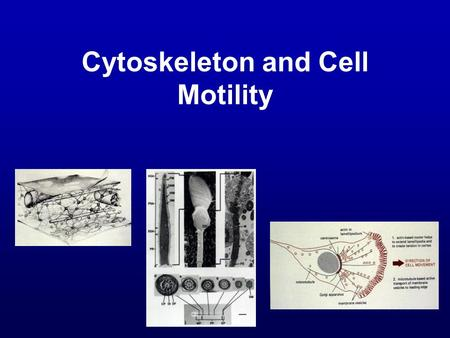 Cytoskeleton and Cell Motility. Objective To survey the structure, protein composition, and functions of a complex network of cytoplasmic filaments known.
