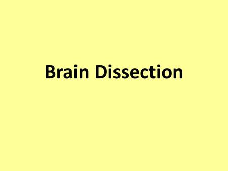 Brain Dissection. How to perform a successful brain dissection Perform each step of the lab, referring to this power point for guidance. Carefully study.