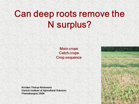 Can deep roots remove the N surplus? Main crops Catch crops Crop sequence Kristian Thorup-Kristensen Danish Institute of Agricultural Sciences Plantekongres.