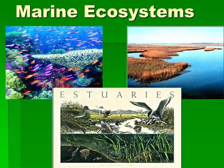Marine Ecosystems. Ocean coasts support plant and animal life  Habitat – an environment that has all necessary requirements for an organism to live.