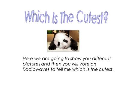 Here we are going to show you different pictures and then you will vote on Radiowaves to tell me which is the cutest.