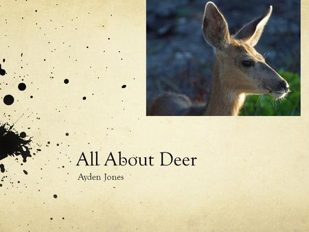 All About Deer Ayden Jones Were they live Here are the places where deer live. North America Europe northern Africa and Asia.