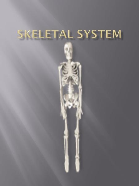  Support The main job of the skeleton is to provide support for our body. Without your skeleton your body would collapse into a heap. Your skeleton is.