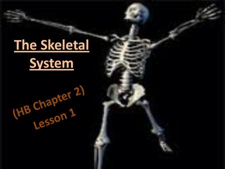 The Skeletal System (HB Chapter 2) Lesson 1. Backbone made up of 26 small bones. vertebrae.