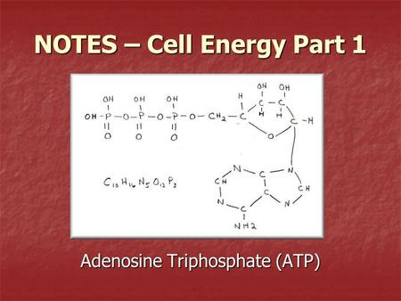 NOTES – Cell Energy Part 1 Adenosine Triphosphate (ATP)