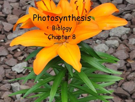 Photosynthesis Biology Chapter 8. 8.1 Energy and Life Energy is the ability to do work What is work for cells? Plants, algae, and some bacteria use light.