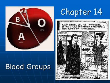 Chapter 14 Chapter 14 Blood Groups. ABO Blood Group is determined from three alleles. ABO Blood Group is determined from three alleles. Type A Type A.
