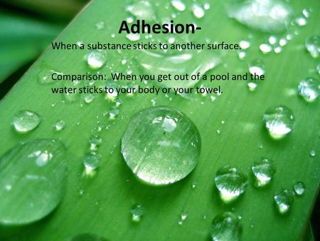 Adhesion- When a substance sticks to another surface. Comparison: When you get out of a pool and the water sticks to your body or your towel.
