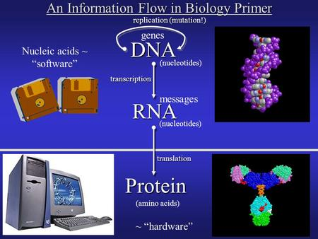 "DNA RNA Protein replication (mutation!) transcription translation (nucleotides) (amino acids) (nucleotides) Nucleic acids ~ ""software"" ~ ""hardware"" An."