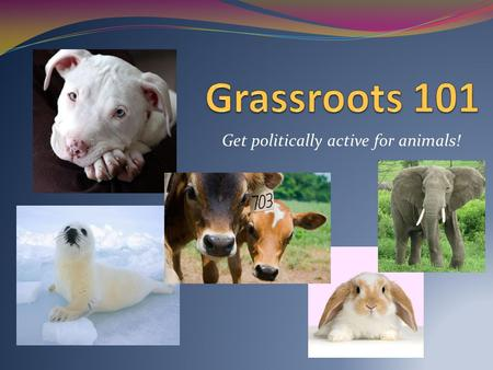 Get politically active for animals!. What is grassroots advocacy? An organized effort by citizens to affect public policy by influencing policy-makers.