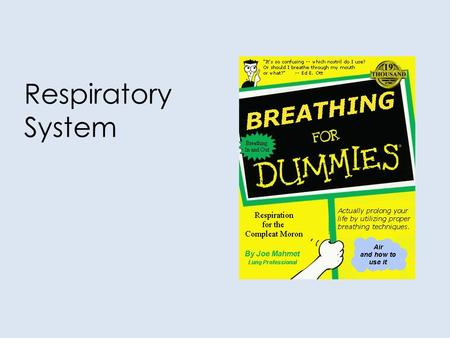 Respiratory System. RESPIRATORY STRUCTURES OUR GOALS TODAY... Identify and give functions for each of the following: – nasal cavity– pharynx – larynx–
