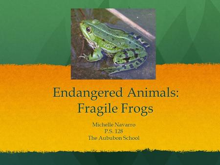 Endangered Animals: Fragile Frogs Michelle Navarro P.S. 128 The Aububon School.