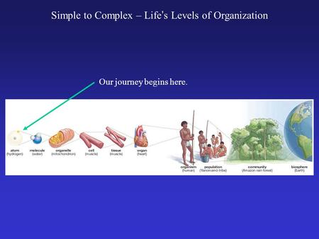Simple to Complex – Life ' s Levels of Organization Our journey begins here.