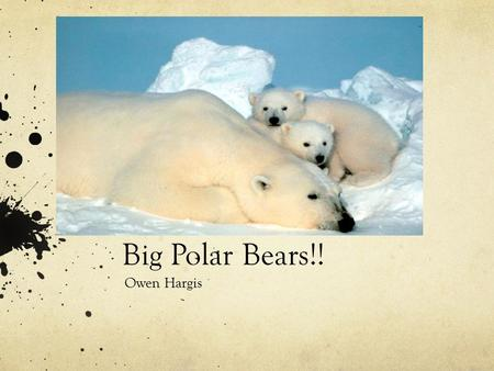 Big Polar Bears!! Owen Hargis Predator And Prey The Polar Bears eat Ringed Seals, Artic Foxes, Birds, Berries, Fish, Reindeer, and Occasional Walrus.