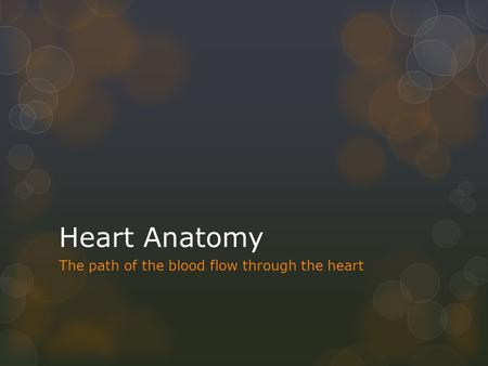 Heart Anatomy The path of the blood flow through the heart.