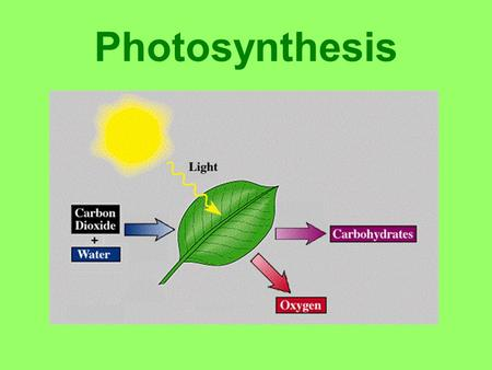Photosynthesis Light Absorption Sun gives off visible light (ROYGBIV) Unabsorbed light reflects to our eyes –Most green light not absorbed by leaves.