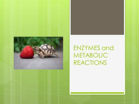 ENZYMES and METABOLIC REACTIONS.  How do reactions occur in cells ?  Molecules are in constant motion  Collisions between molecules allow reactions.