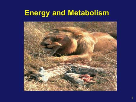 1 Energy and Metabolism. 2 The Energy of Life The living cell generates thousands of different reactions Metabolism Is the totality of an organism's chemical.