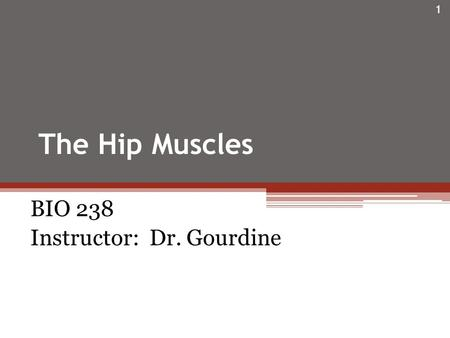 The Hip Muscles BIO 238 Instructor: Dr. Gourdine 1.