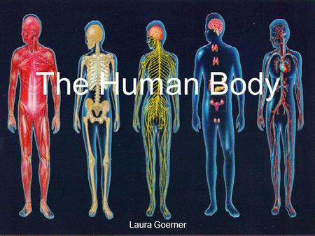The Human Body Laura Goerner. TEKS §112.22. Science, Grade 6. (a) Introduction. (5) A system is a collection of cycles, structures, and processes that.