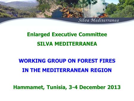 WORKING GROUP ON FOREST FIRES IN THE MEDITERRANEAN REGION Enlarged Executive Committee SILVA MEDITERRANEA Hammamet, Tunisia, 3-4 December 2013.