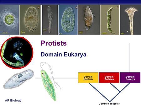 Campbell Biology Chapter 28: Protists - Study.com