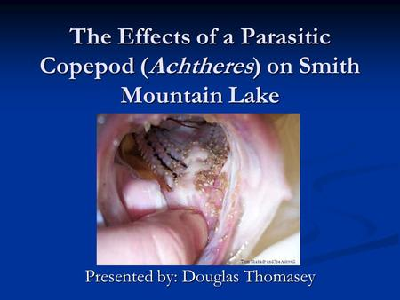 The Effects of a Parasitic Copepod (Achtheres) on Smith Mountain Lake Presented by: Douglas Thomasey Tom Shahady and Joe Ashwell.