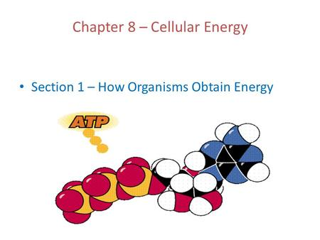 Chapter 8 – Cellular Energy Section 1 – How Organisms Obtain Energy.