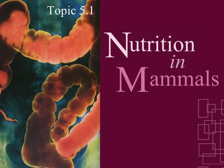 N Topic 5.1 ammals in utrition M. Feeding/Ingestion Intake of food & processes that convert food substances into living matter Digestion Absorption Egestion.