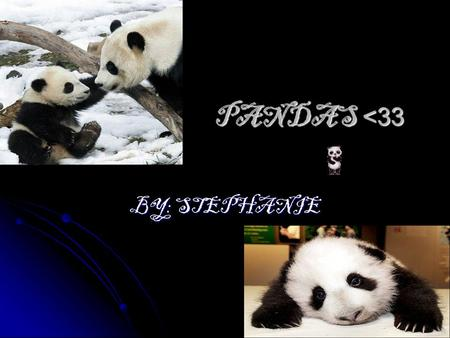 PANDAS <33 PANDAS <33 BY: STEPHANIE. Basic information Panda Bears, are cute and adorable, there on the endangered species list. Their habitat, extremely.