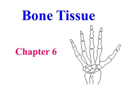 Bone Tissue Chapter 6. Functions of Bone Support - surrounding tissue Protect - vital organs and other tissues Movement - attachment for muscles Mineral.