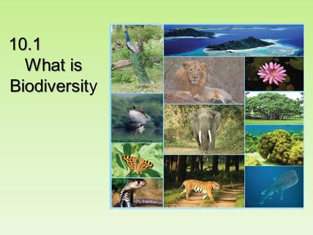 10.1 What is Biodiversit What is Biodiversity. In two minutes, list as many species as you can think of.