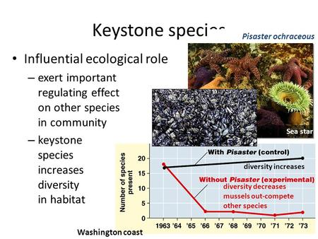 Influential ecological role – exert important regulating effect on other species in community – keystone species increases diversity in habitat Keystone.