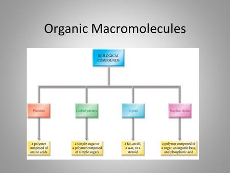 Organic Macromolecules. Organic Life Molecules Carbon based Macromolecules - polymers Found in all living things Many different functions.
