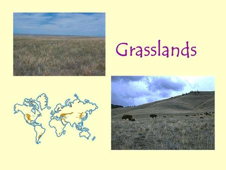 Grasslands. Grassland Location and Climate Grasslands are characterized as lands dominated by grasses rather than large shrubs or trees. There are two.