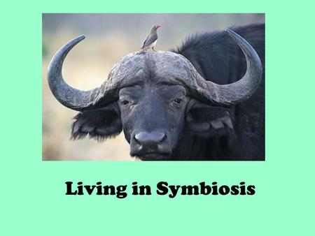 Living in Symbiosis. A win – win partnership between two or more organisms. They help each other.