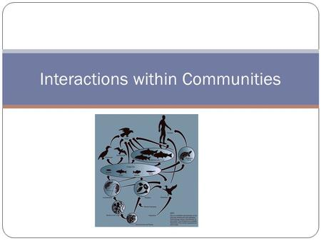 Interactions within Communities. Populations of different species interact in a community Some organisms rely on other organisms within the community.