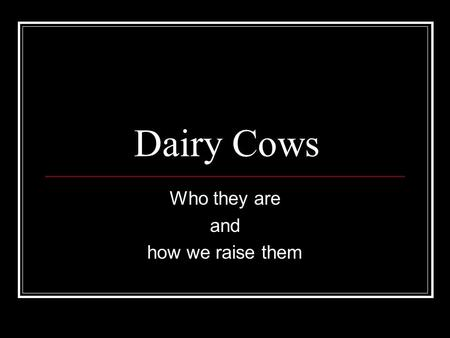 Dairy Cows Who they are and how we raise them. Dairy Cows Are less muscular than beef cattle Often look thin to the uneducated consumer Produce milk for.