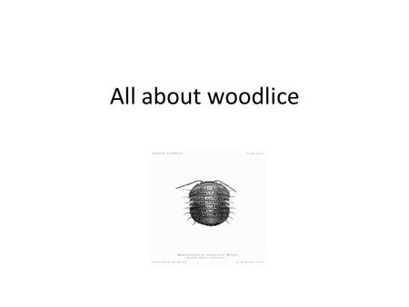 All about woodlice. What is a woodlouse? Woodlice are invertebrates, which means that they do not have a backbone. Woodlice are not insects but crustaceans.