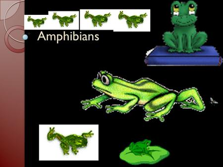 Amphibians. Amphibians What Is an Amphibian? Amphibians lead double lives—one in water and one on land. Many begin life with gills, then develop.