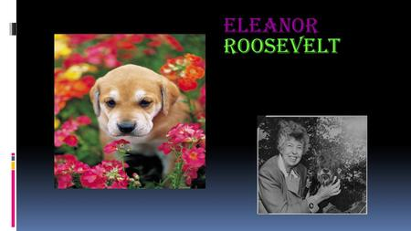Eleanor Roosevelt. In 1884 Eleanor Roosevelt was born.