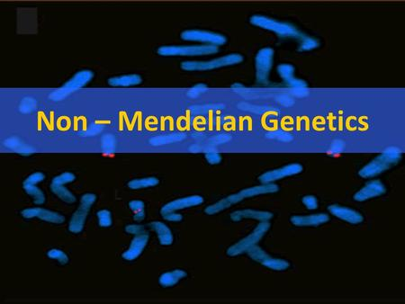 Non – Mendelian Genetics *Not all traits follow Mendel's rules!