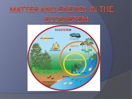 Roles of Living Things  All organisms need energy to live.  In ecosystem, energy moves in ONE direction: Sun Organisms  Energy from sun enters ecosystem.