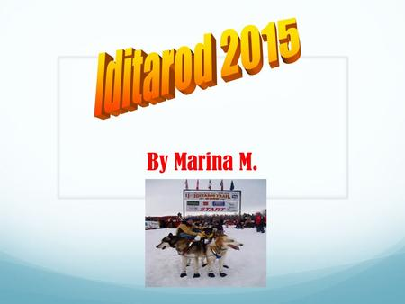 By Marina M. The Iditarod is a dog sled race that's been going on for many years. The Iditarod race started back in 1973. But back in 1925, there were.