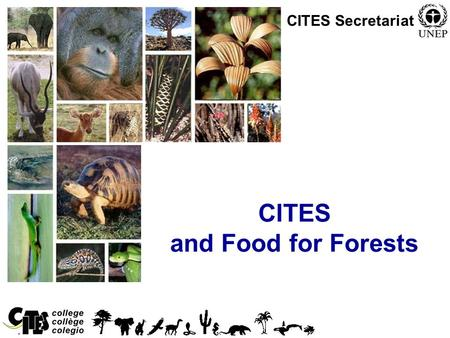 CITES and Food for Forests