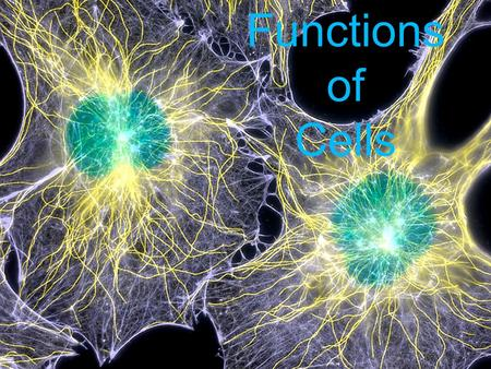 Functions of Cells. Things to Know The shape and size of a cell are related to its function. What does that mean? The shape of the cell helps it perform.
