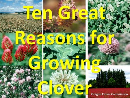 Ten Great Reasons for Growing Clover Oregon Clover Commission.