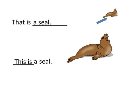That is __________a seal. This is ______a seal.. Those are __________foxes. These are________ foxes.