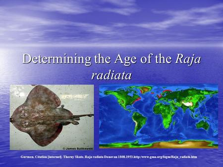Determining the Age of the Raja radiata Garmen. Citation [internet]. Thorny Skate. Raja radiata Donovan 1808.1953.http:/www.gma.org/fogm/Raja_radiata.htm.