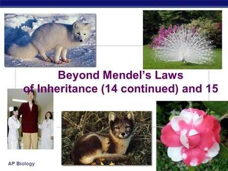 AP Biology Beyond Mendel's Laws of Inheritance (14 continued) and 15.